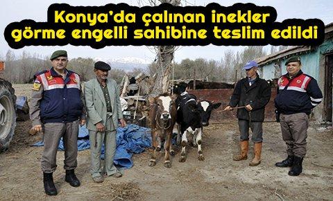Konya'da çalınan inekler görme engelli sahibine teslim edildi
