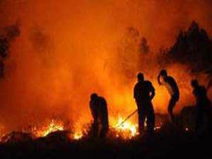 Seydişehirde orman yangını