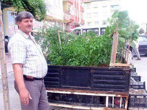 Pikabını sebze bahçesi yaptı