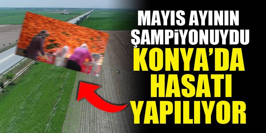 Mayıs ayının zam şampiyonuydu! Konyada hasatı yapılıyor