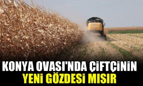 Konya Ovasında çiftçinin yeni gözdesi mısır