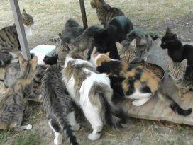 3 yılda 29 sokak kedisini sahiplendi