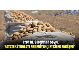 Patates ithalatı nedeniyle çiftçiler endişeli