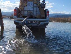 Beyşehir Gölüne sazan balığı bırakıldı