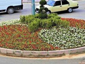 Ereğli'de kavşak ve refüjler çiçeklerle donatılıyor
