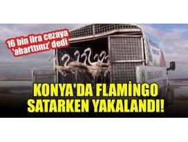 Konyada Flamingo satarken yakalandı! 16 bin lira cezaya abarttınız dedi