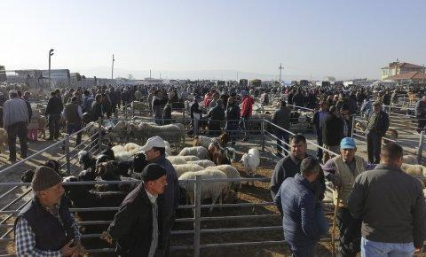 Ilgında hayvan pazarındaki veba karantinası sona erdi
