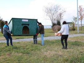 Beyşehirde sokak köpeklerine evler yapıldı