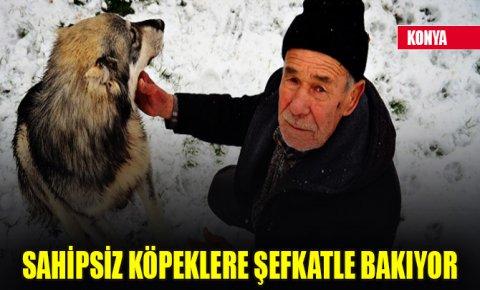 Konyada 77 yaşındaki Eyüp Nizam sahipsiz köpeklere şefkatle bakıyor