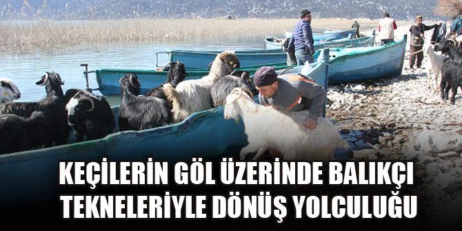 Keçilerin göl üzerinde balıkçı tekneleriyle dönüş yolculuğu