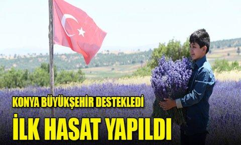 Konya Büyükşehir Belediyesi'nin desteğiyle ekilen lavantanın ilk hasadı yapıldı
