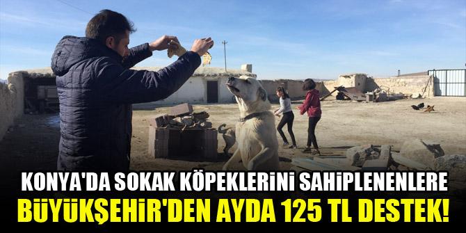 Konyada sokak köpeklerini sahiplenenlere Büyükşehirden ayda 125 TL destek!