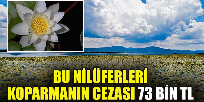 Beyşehir Gölündeki nilüferleri koparmanın cezası 73 bin TL