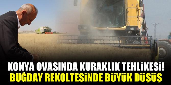 Konya ovasında kuraklık tehlikesi! Buğday rekoltesinde büyük düşüş