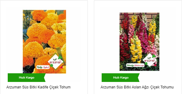 Çiçek Tohumu