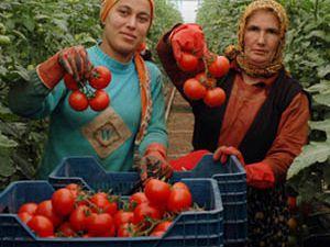 Konya'da tıbbi ürünler yetişecek