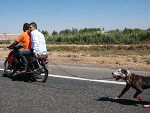 Hayvana İnsanoğlu işkencesi