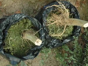 Uyuşturucu tacirleri 35 kg esrarla yakalandı