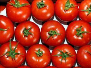 İsrailin domates tohumuna veda