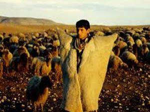 Okullu çoban dönemi başladı