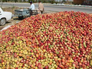 Döküntü elma yüz güldürdü