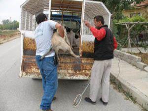 Başıboş hayvanlar rehabilite ediliyor