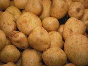 Konya, patates üretiminde iddialı