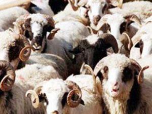 Sokakta Kurban kesene 250 lira ceza