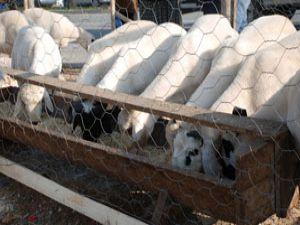 Meramda kurbanlık satış ve kesim yerleri belirlendi