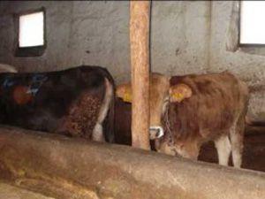 Farmville besicilik kredisi talebini patlattı