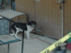 Sadık köpek ölen sahibini terketmedi