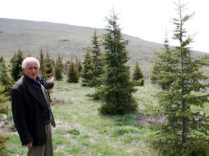 Çölleşen alanı 11 yılda ağaçlandırdı