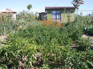 Hobi bahçesi başvurularında sona yaklaşılıyor