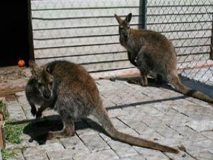 Hayvanat bahçesinin yeni misafirleri