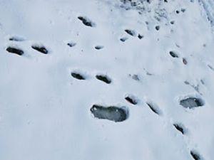 Kardaki ayak izleri zanlıyı ele verdi