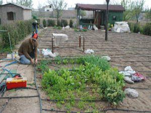 Bahçe sahipleri kurayla belirlenecek