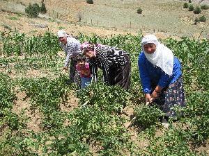 Çiftçilere40 bin lira verilecek