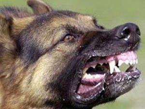 Karapınarda köpek saldırısı