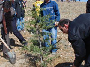Akşehirde 2 bin çam fidanı dikildi