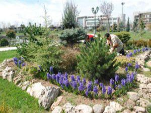 Rengarenk sümbüllerle parklar daha güzel