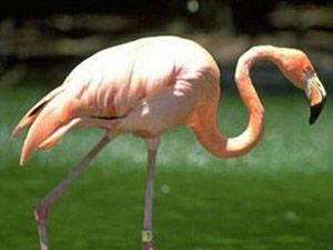 Yağışlar arttı, flamingolar geri döndü