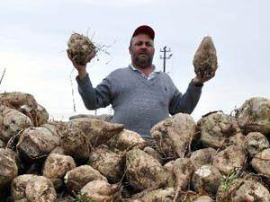 Konya Şekerden üreticiye 450 milyon lira
