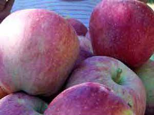 Elmanın kaç tane şifasını biliyorsunuz?