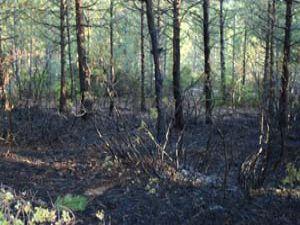 Beyşehirde orman yangını