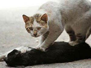 Kediden bir insanlık dersi