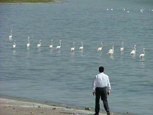 Düden Gölünün kuşları yuvaya dönüyor