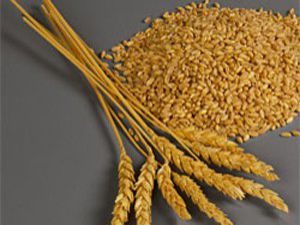 Konyada buğday fiyataları