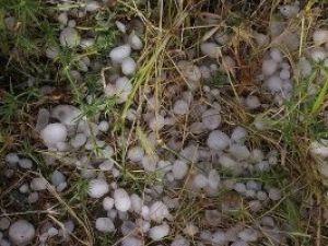 Dolu Konyada ekinleri vurdu