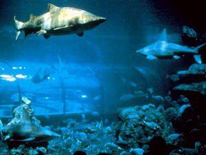 Akvaryum Ücretsiz Olunca Balıklar Telef Oldu