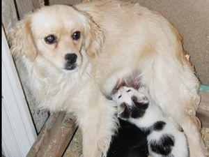 Köpeğin kedi sevgisi bir başka!